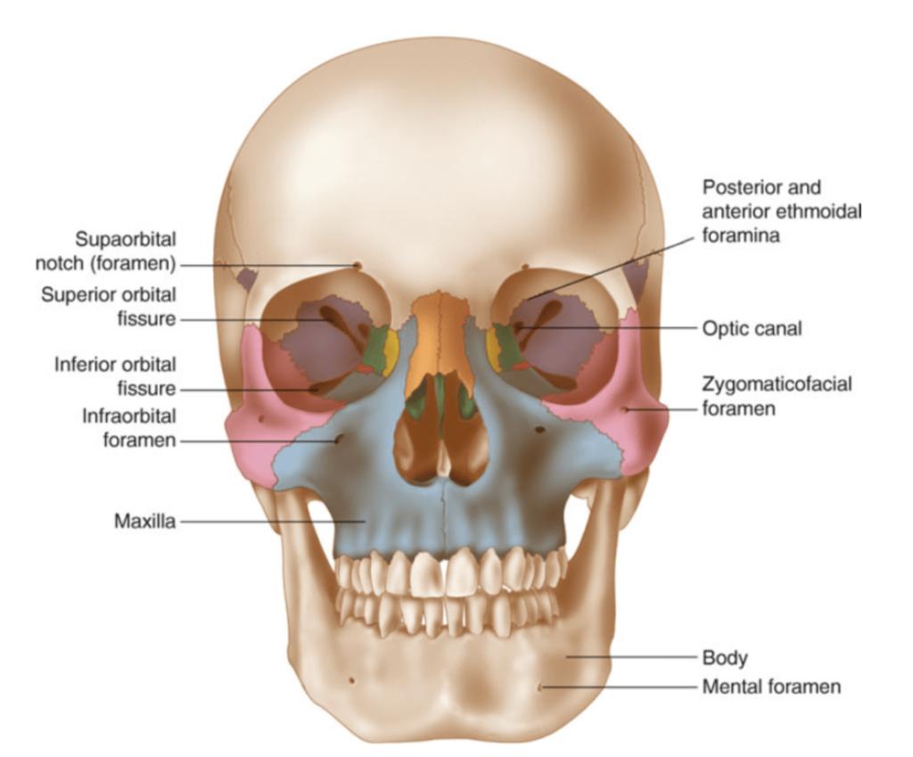 le fort fracture surgeon miami florida
